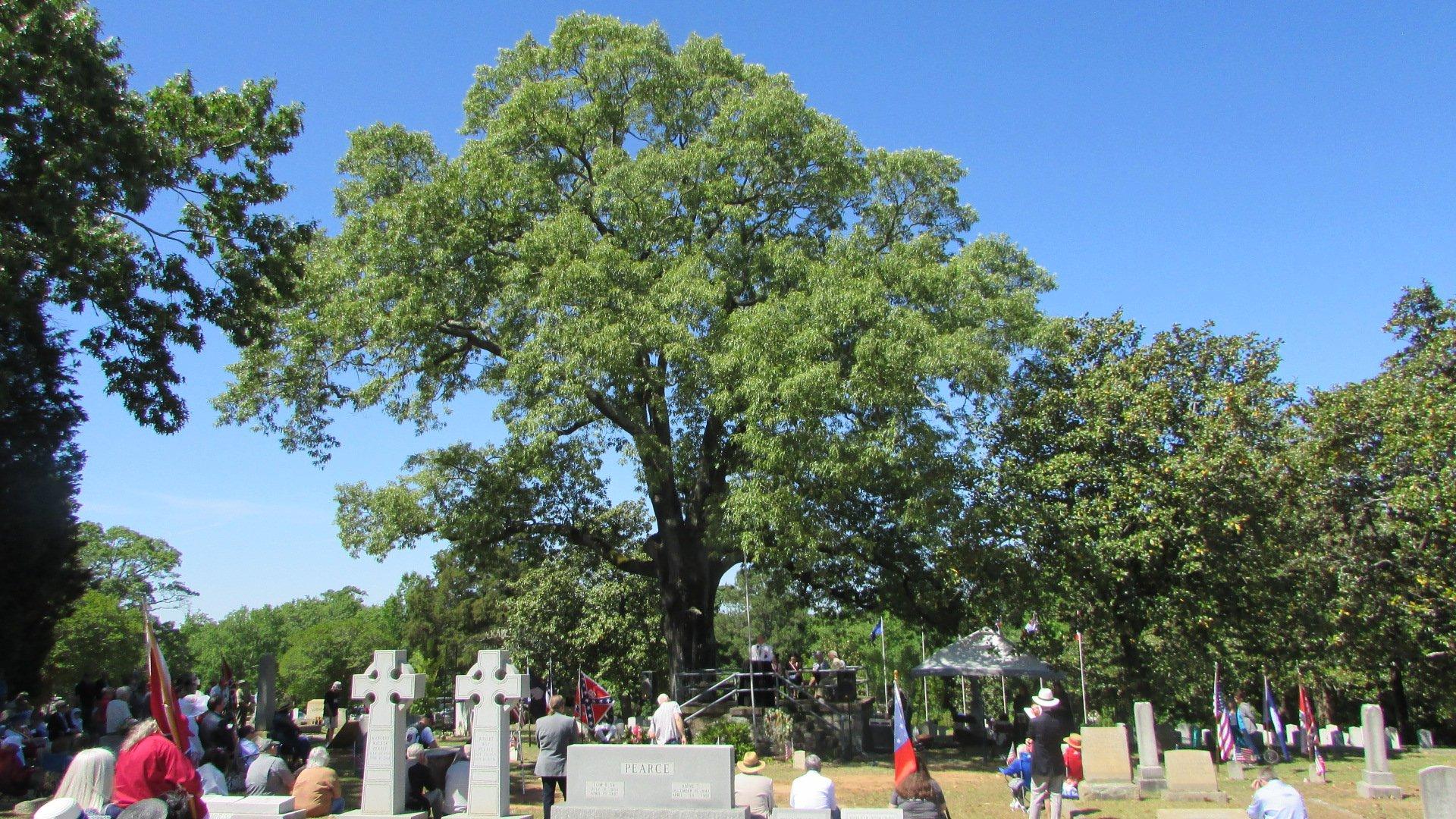 Elmwood Memorial (10)